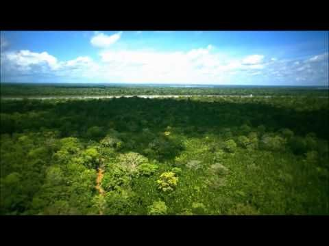 Amazone regenwoud ontbossing - YouTube