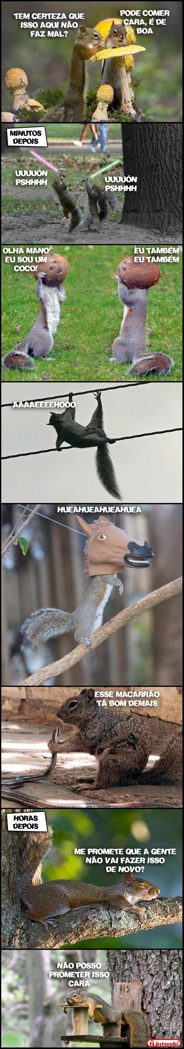 Os dois esquilos doidos! aheehuehu