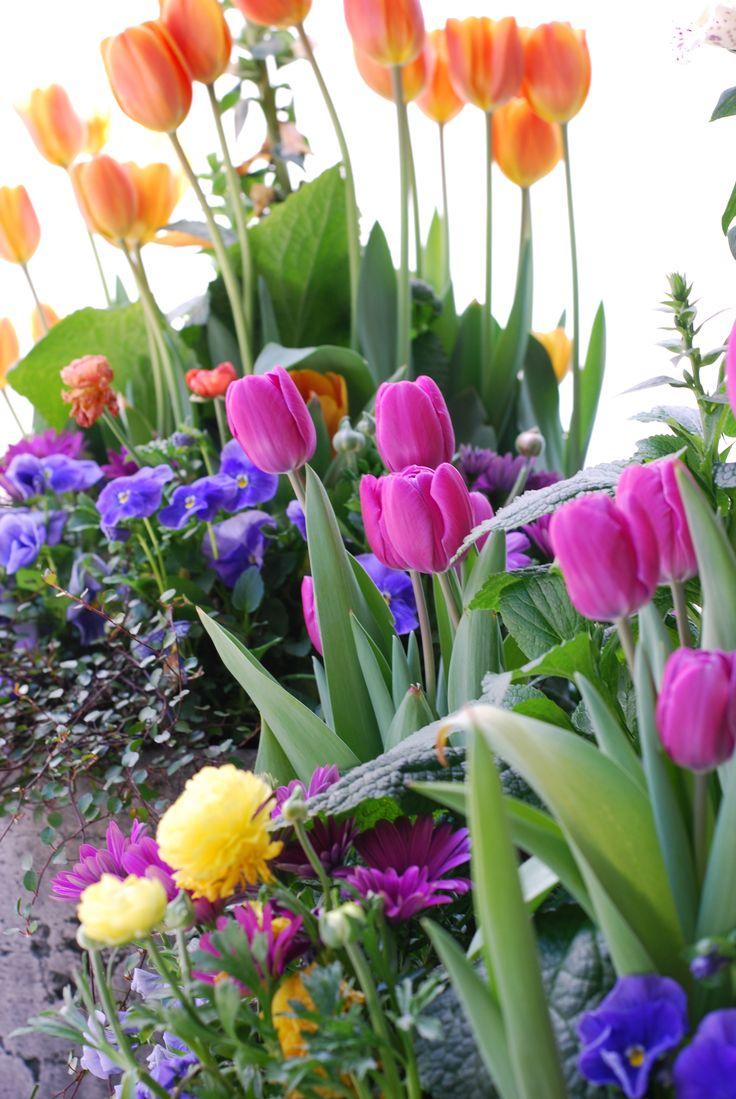 10 best images about Annual flower gardens on Pinterest