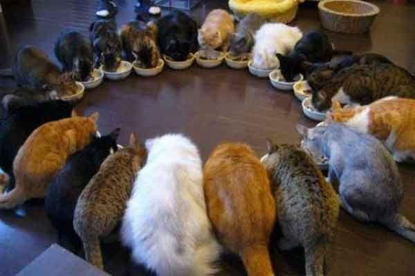 Cara Agar Kucing Berteman Dengan Lainnya - http://kucingraas.co.id/cara-agar-kucing-berteman-dengan-lainnya/