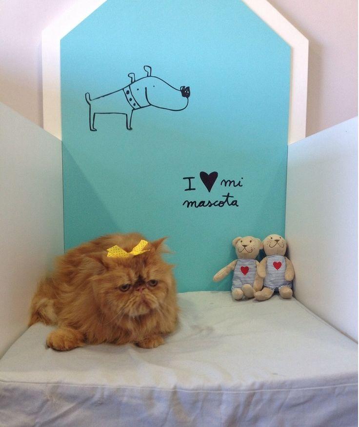 También los #gatos pasan por la #peluqueria Dog's Affaire. Este es Monti, un persa muy muy bueno :)