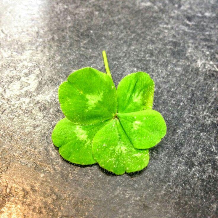 5 leaf clover found by brother inlaw