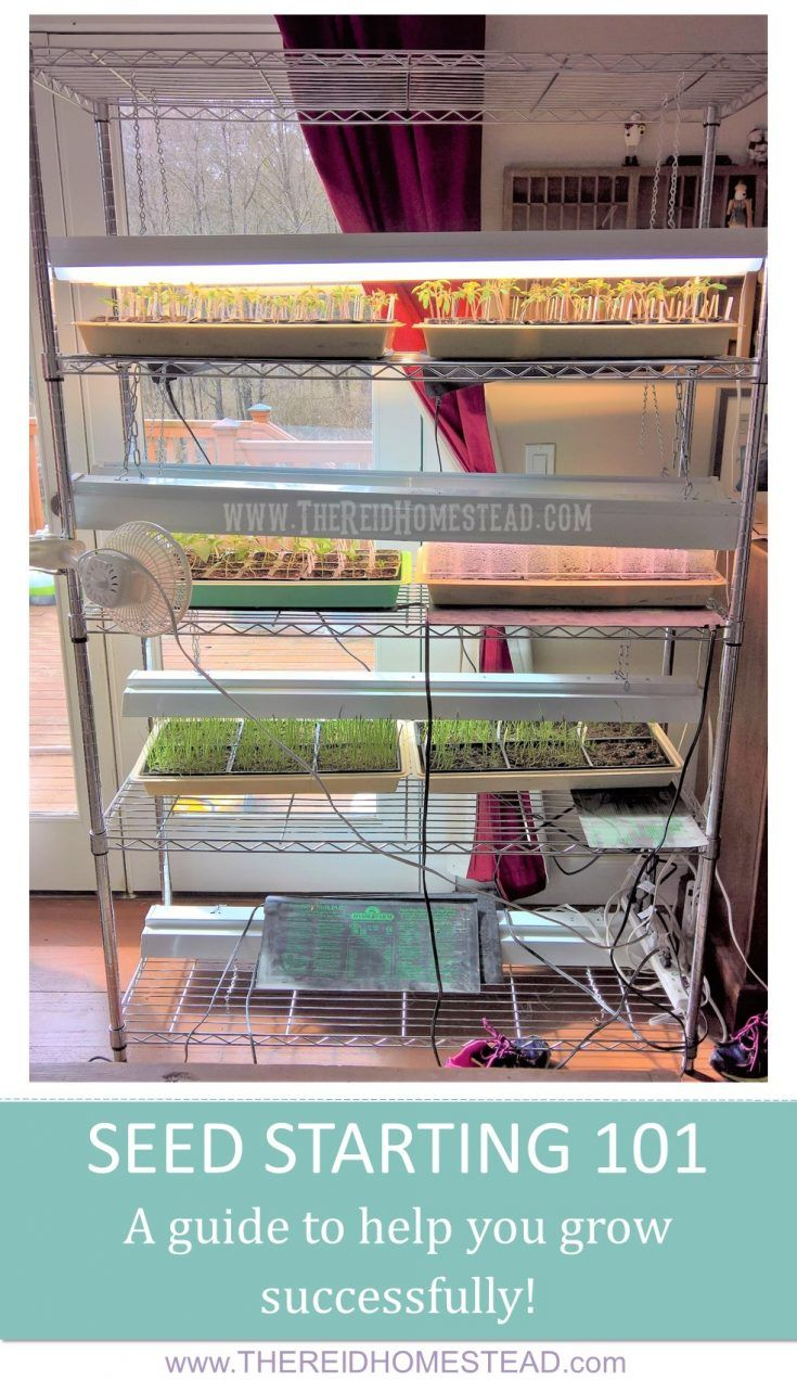 seed starting 101 how to guide tips and tricks to grow from seed successfully indoors