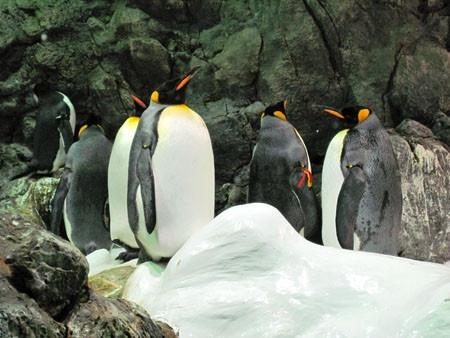 Pinguine im Loro Parque, Tenerife