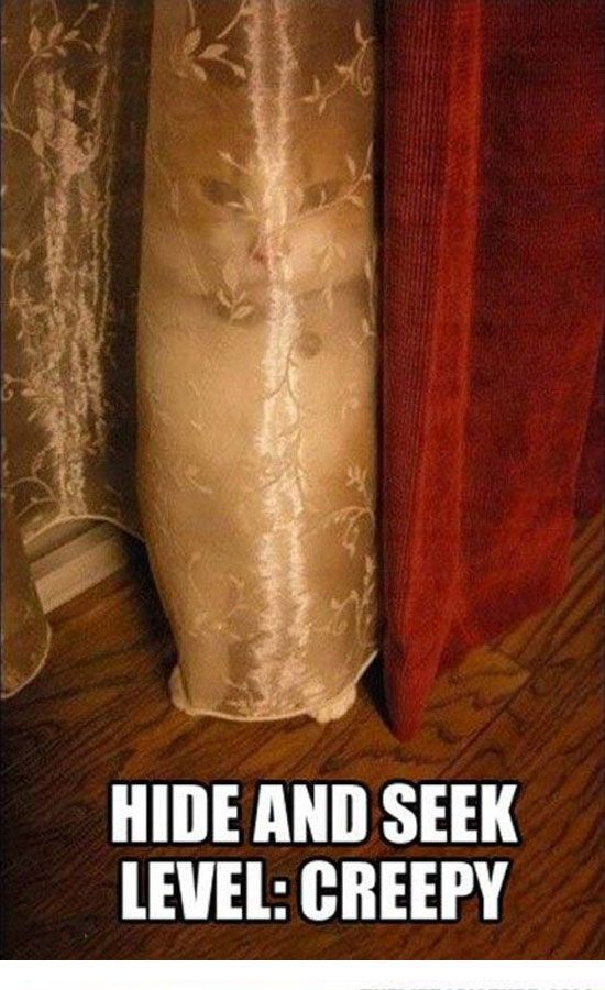 Hide & Seek - Level Creepy - Funny Animals with Captions LOL