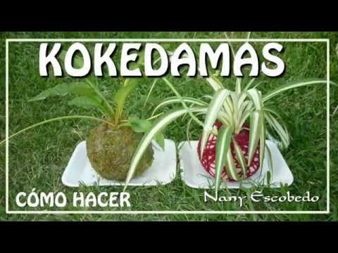 Tutorial : cómo preparar un kokedama fácil y decorativo - YouTube