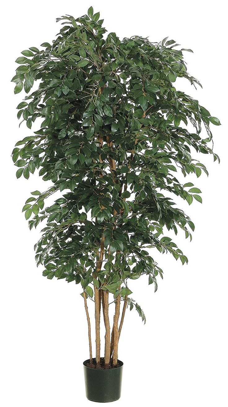 Silk Plants Direct Sakaki Tree (Pack of 2) >>> Click image for more details.