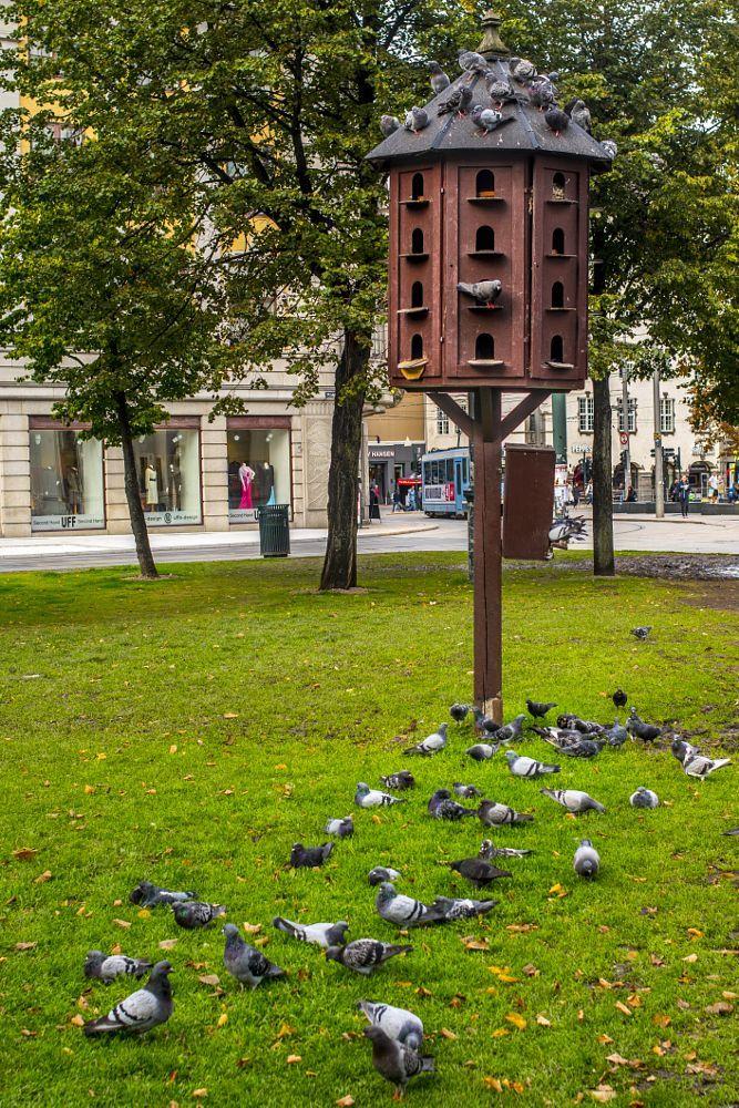 Pidgeon Hostel by Ole Morten Eyra