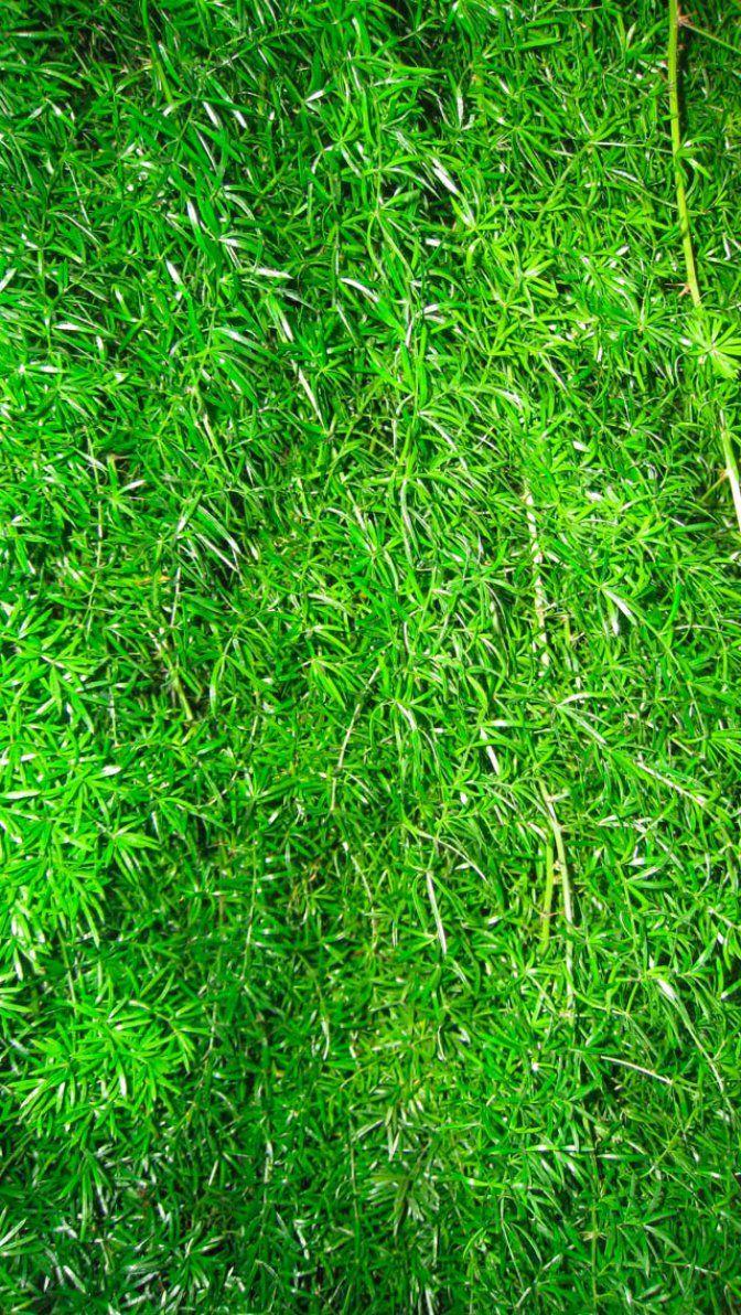 %TİTLE% - Grass Whatsapp HD Wallpaper - Grass Whatsapp HD Wallpaper - https://whatsappwallpapers.com/grass-whatsapp-wallpaper/ - download, Free, HD, nature, wallpaper, wallpapers, whatsapp, whatsapp wallpaper, Whatsapp Wallpaper HD, whatsapp wallpapers, Whatsapp Wallpapers Hd - #whatsapp #wallpaper