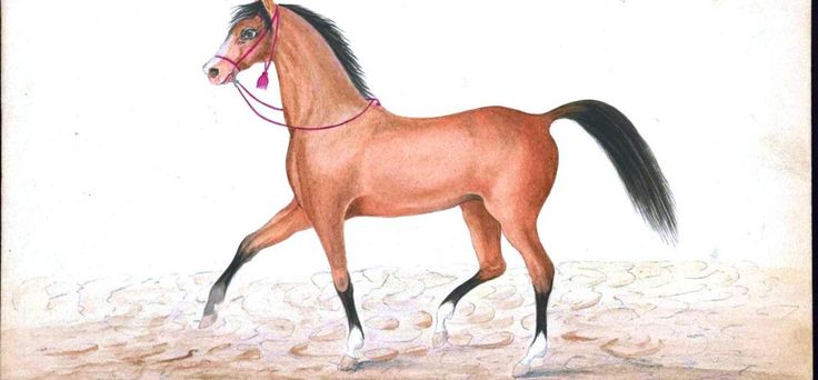 Horses have been important to the Turks and Turkey for more than 5000 years. First used as food they were then used in war as cavalry and draught animals, then in agriculture and for transport and now largely for leisure and sport.