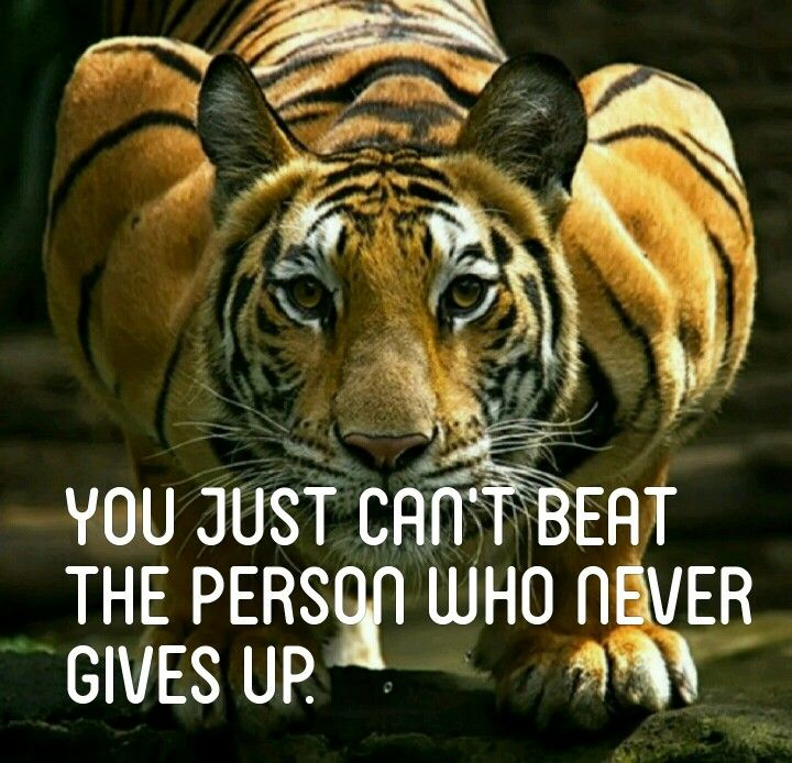 You Just Can't Beat The Person Who Never Gives Up
