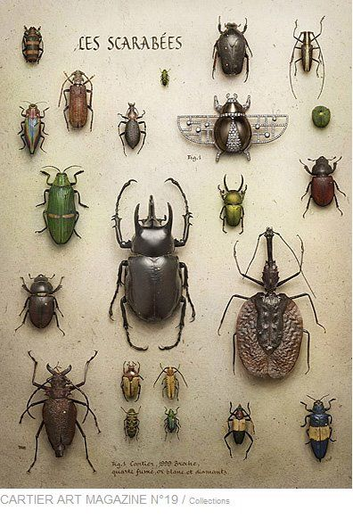 #cartier  #beetle peter lippmann #photo serie