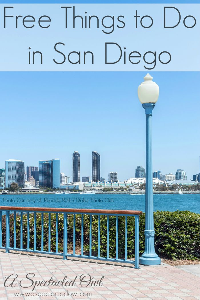 Free Things to do in San Diego - A Spectacled Owl