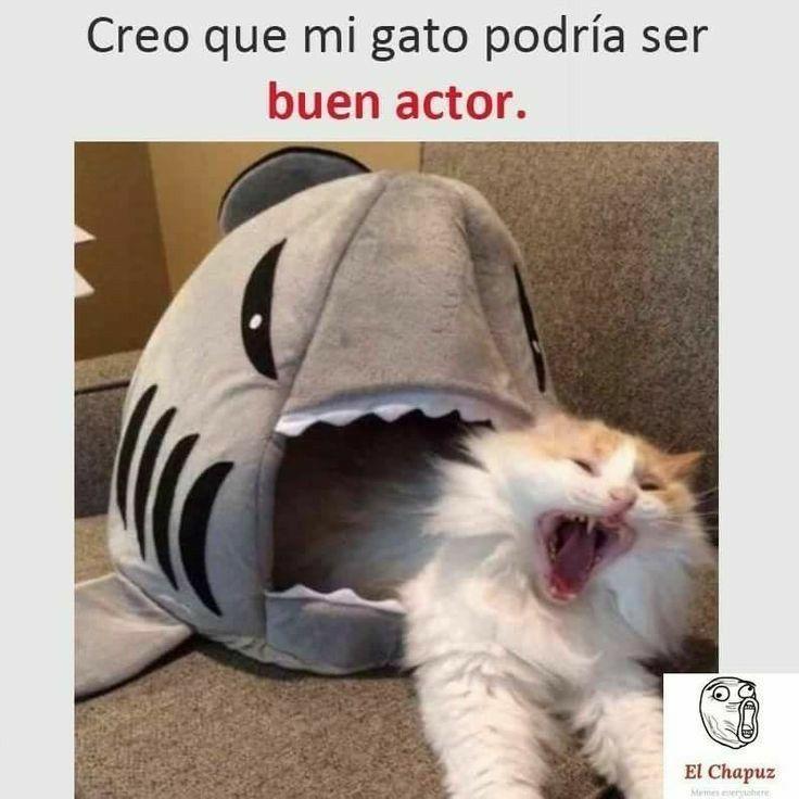 Mi Gato El Actor Meme Gato Memes De Animales Divertidos Memes Graciosos De Animales