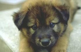 its a cute wittle puppy dont yall agree?!?!?