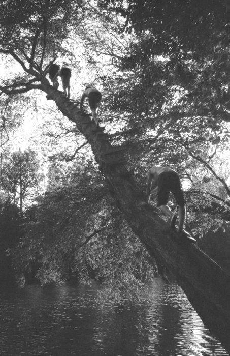 tree trippin