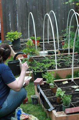 Urban gardening tips, including starting seeds, container gardens, and square foot gardening.