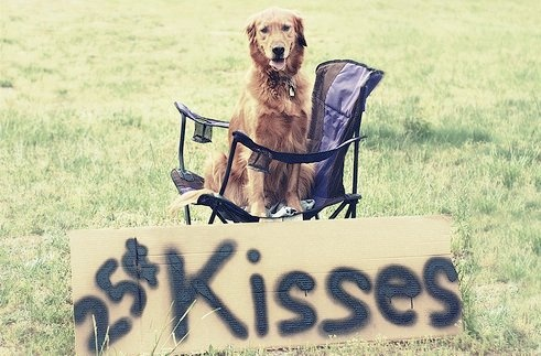 You can always rely on Golden Retrievers to show love! This would be a cute fundraising idea for #The3Day.