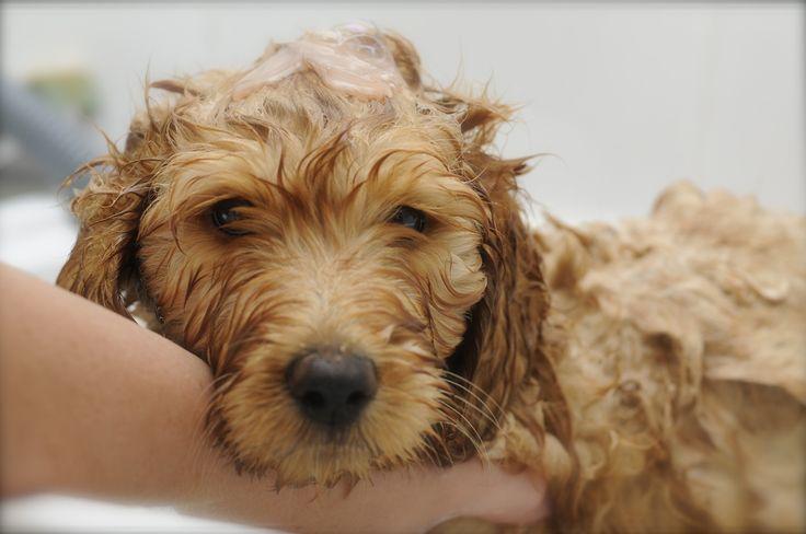 Bath time bear