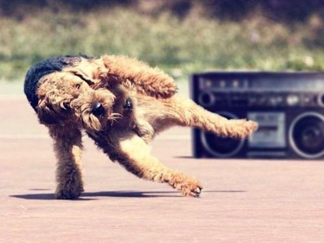 Image result for site: pinterest.com weird dogs