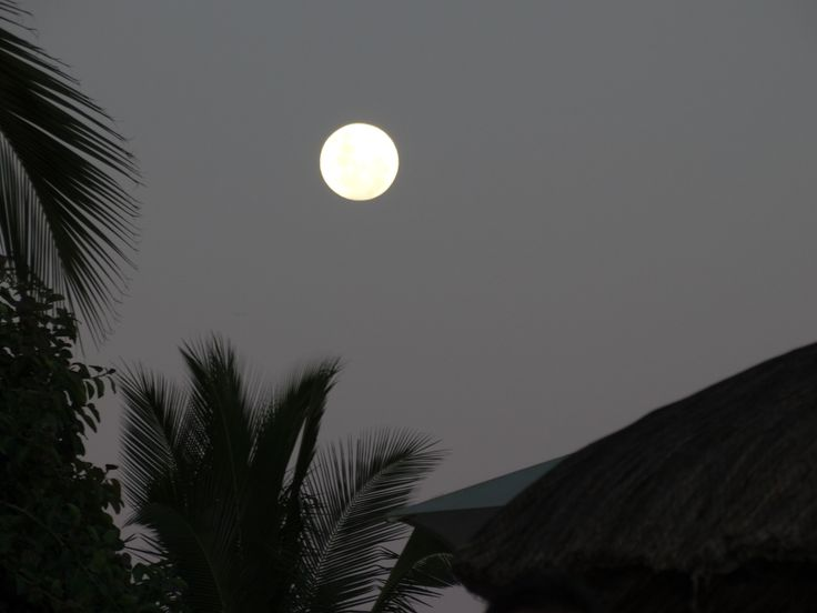 full moon and coconut trees, Mauritius