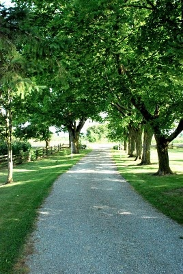rural gravel driveway. Would love this drive way.