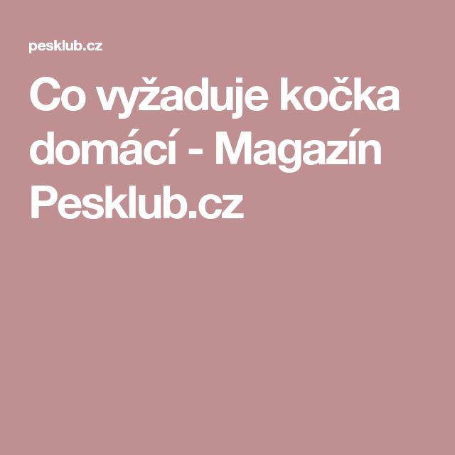 Co vyžaduje kočka domácí - Magazín Pesklub.cz