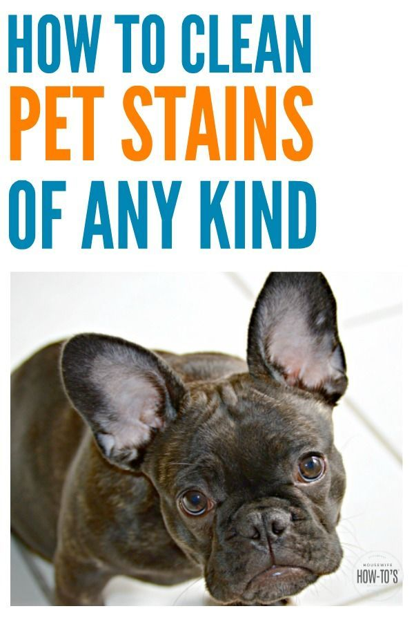 How To Clean Pet Stains Pets Fleas Pet Urine