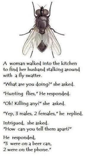 killing flies funny jokes lol funny quotes humor humorous
