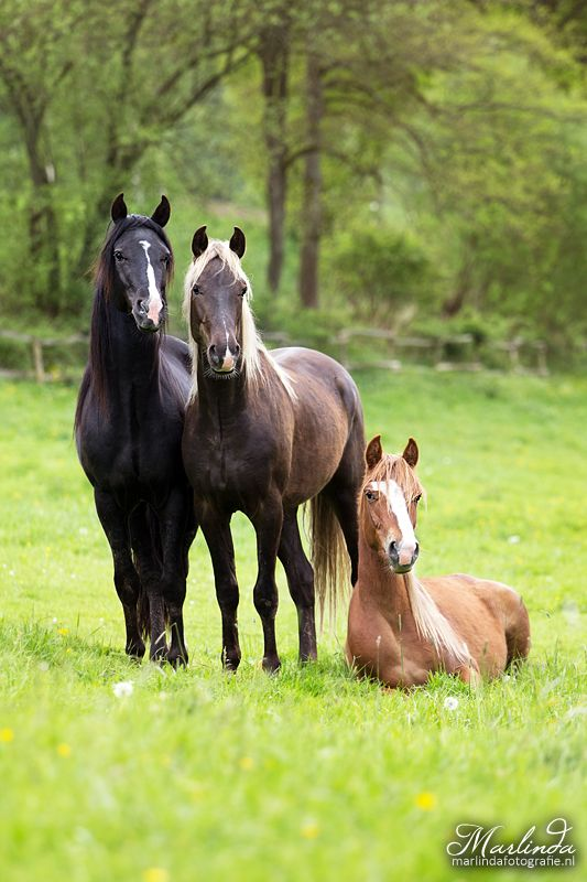 Horses - Equine Photography - by Marlinda Fotografie