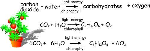 Balanced chemosynthesis equation