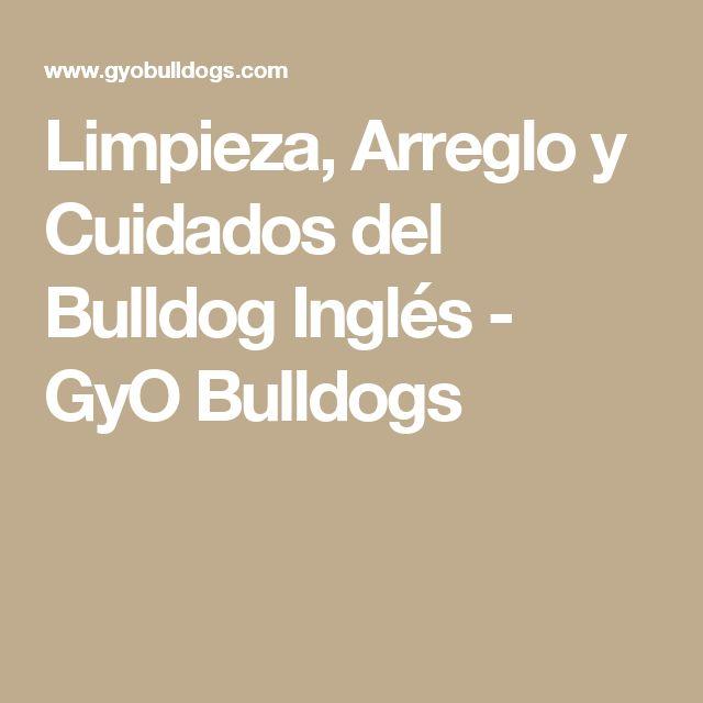 Limpieza, Arreglo y Cuidados del Bulldog Inglés - GyO Bulldogs