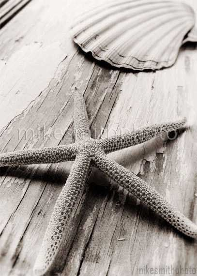 winter outerwear for men Starfish Sea Shell Photo Black White Nautical Decor Nature Print Beac