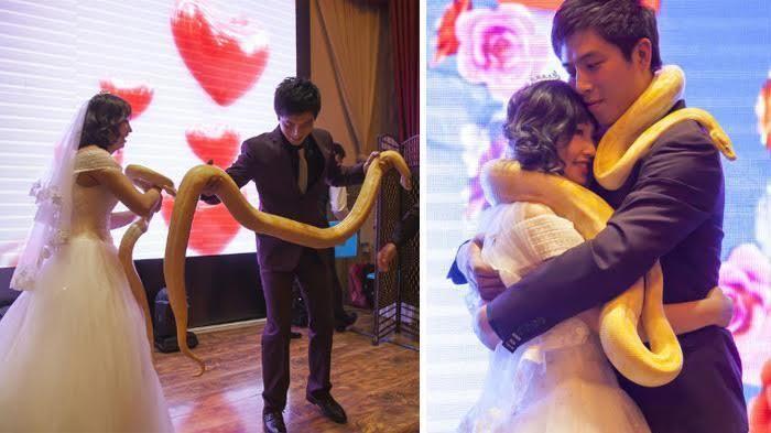 Bukannya Tukar Cincin, Pasangan Ini Lakukan Ikrar Pernikahan dengan Ular Pyhon…