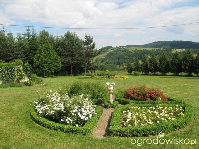 O....! - strona 469 - Forum ogrodnicze - Ogrodowisko