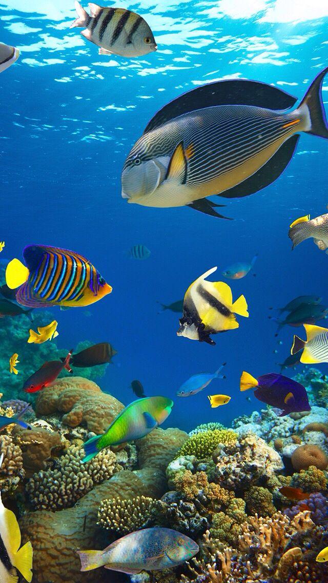 33 besten Unter Wasser! Bilder auf Pinterest   Korallenriffe ...
