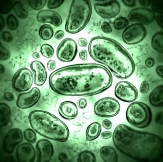 What are some common side effects of Jarro-Dophilus?