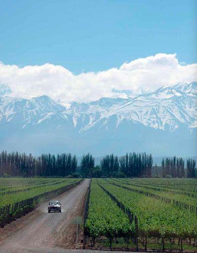 Viñedos, Valle de Uco, Mendoza. To learn more about #Mendoza click here: http://www.greatwinecapitals.com/capitals/mendoza