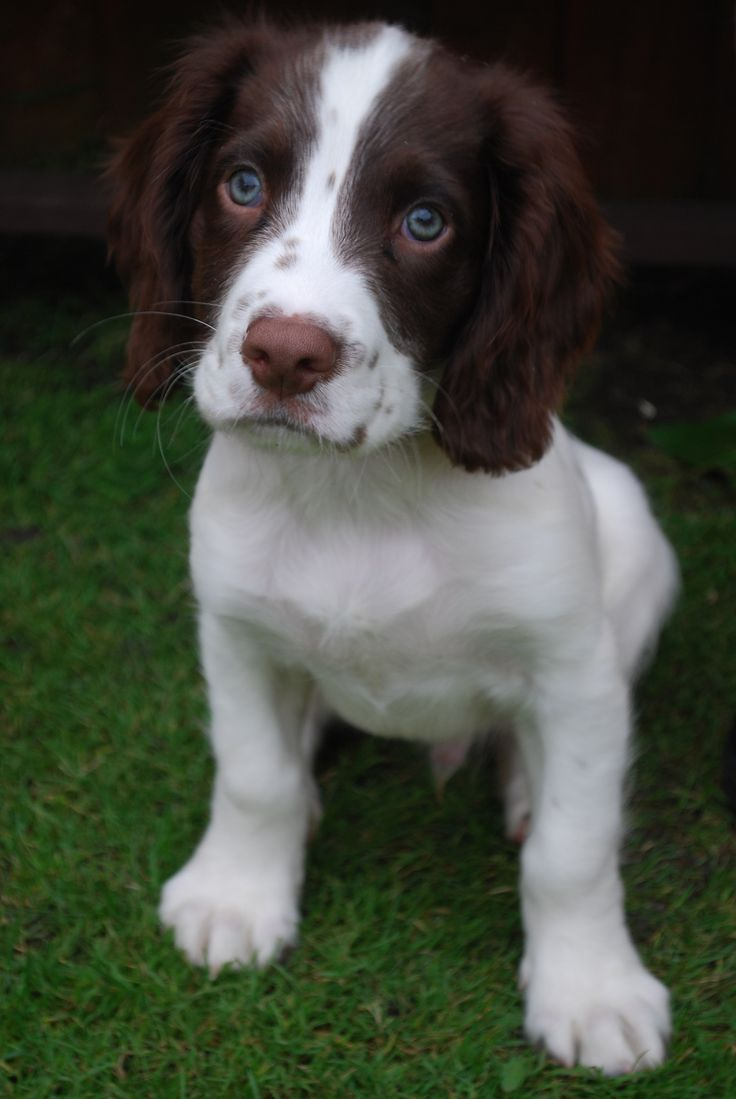 197 best Puppies images on Pinterest