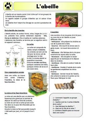 French informational text about bees! Sur l'abeille