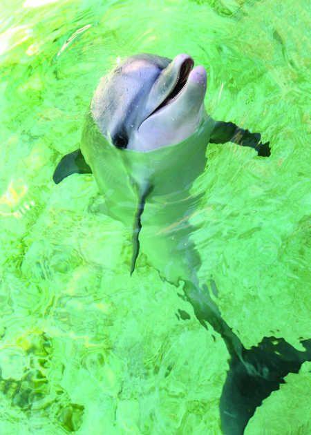 Keys marine mammal facility welcomes baby dolphin | Environment | KeysNet
