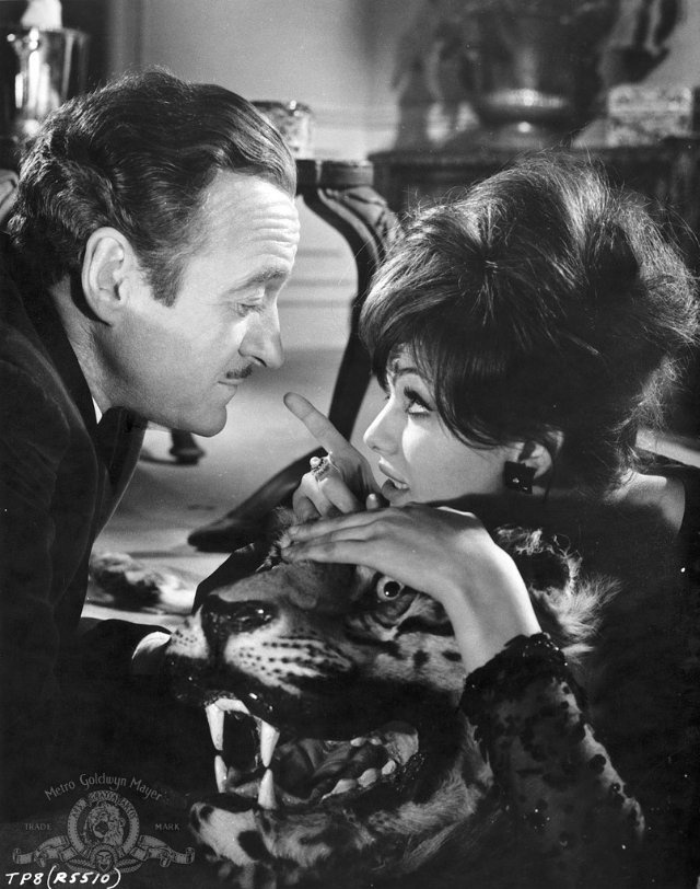 19258cae199b Still of David Niven and Claudia Cardinale in The Pink Panther | Film. in  2019 | Claudia cardinale, David niven, Pink panthers