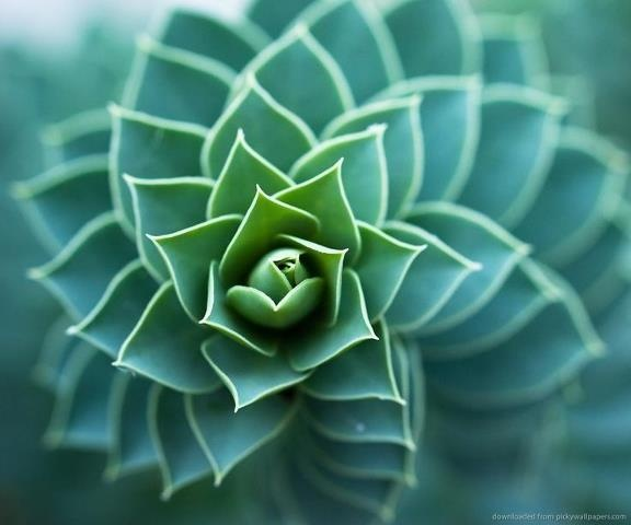 secuencia Fibonacci en la naturaleza  https://www.facebook.com/pages/Revista-Origenes/258388397551989