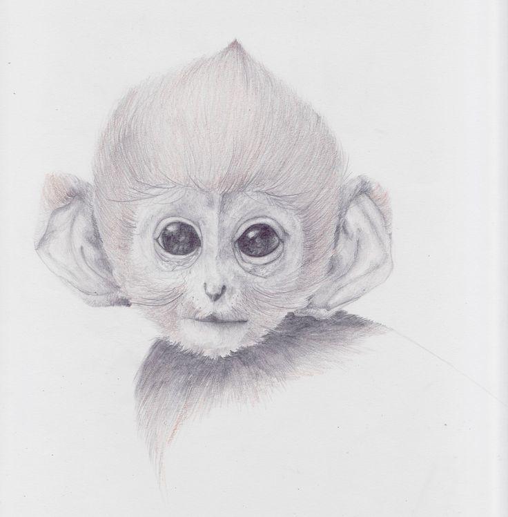 cute monkey drawing