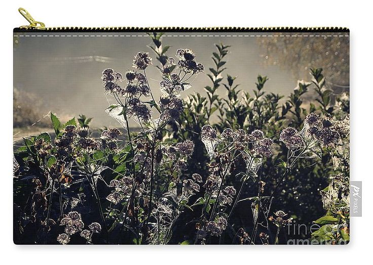 "Morning Dew Backlight Carry-All Pouch by Sverre Andreas Fekjan.  Our pouches are great.  They're availabe in sizes from 6"" x 5"" up to 12.5"" x 8.5"".  Each pouch is printed on both sides (same image)."