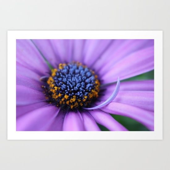 It is a nice purple flower shot in macro. What else can I say? Oh, yes it is my work :)