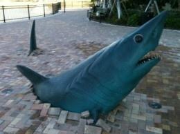 The Mako Shark Statue at NSU-cool!
