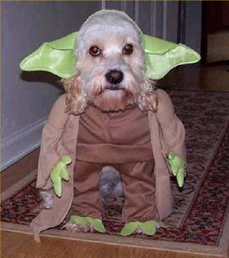dog yoda halloween costume