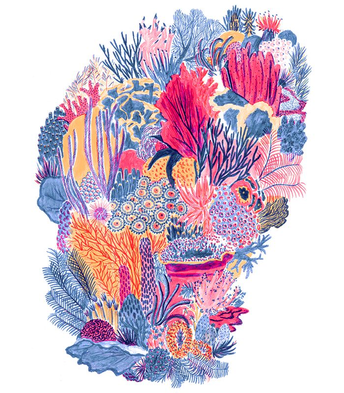 coral drawing - Google Search