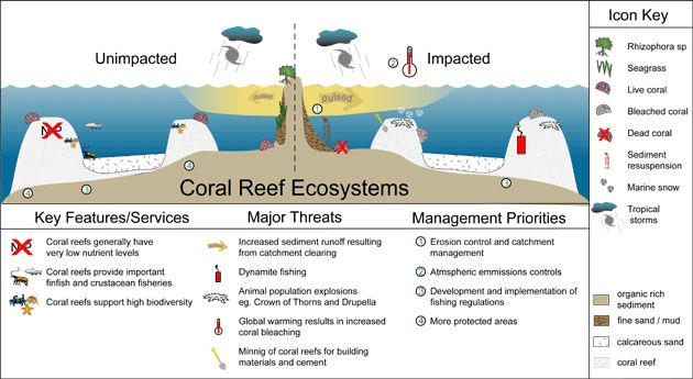 Coral Reef Structure